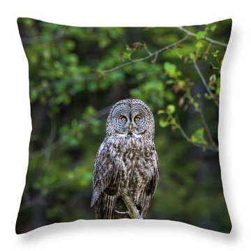 Throw Pillow featuring the photograph B16 by Joshua Able's Wildlife