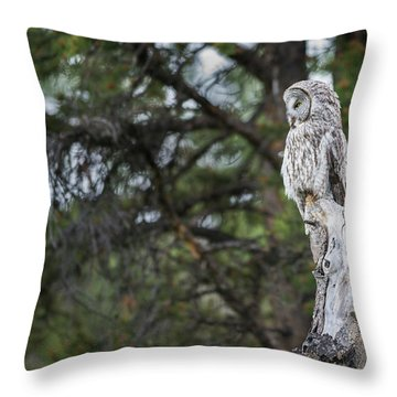 Throw Pillow featuring the photograph B17 by Joshua Able's Wildlife