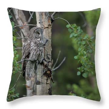 Throw Pillow featuring the photograph B18 by Joshua Able's Wildlife