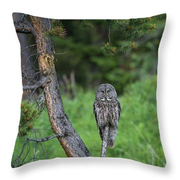 Throw Pillow featuring the photograph B20 by Joshua Able's Wildlife