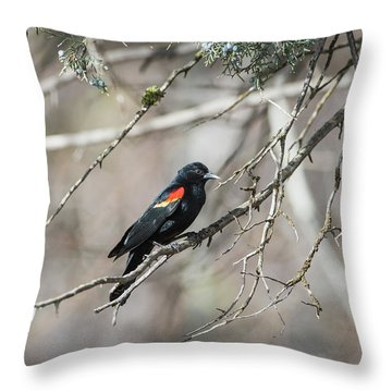 Throw Pillow featuring the photograph B26 by Joshua Able's Wildlife