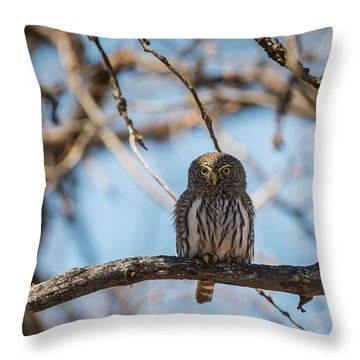 Throw Pillow featuring the photograph B34 by Joshua Able's Wildlife