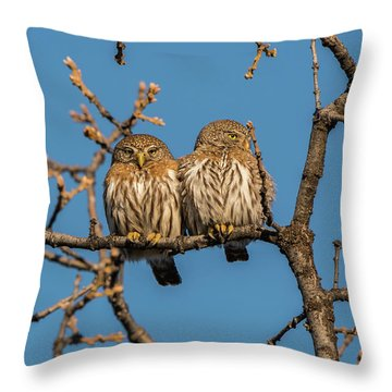 B36 Throw Pillow