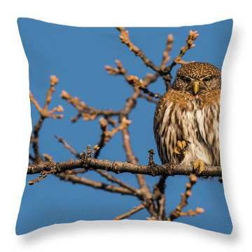 Throw Pillow featuring the photograph B37 by Joshua Able's Wildlife