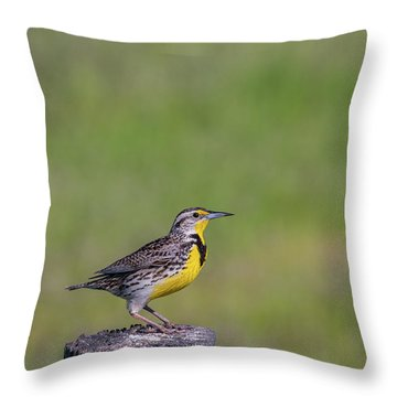Throw Pillow featuring the photograph B39 by Joshua Able's Wildlife