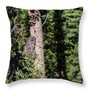 Throw Pillow featuring the photograph B50 by Joshua Able's Wildlife