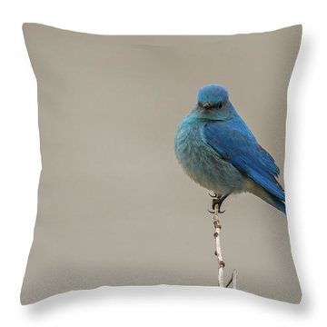 B52 Throw Pillow