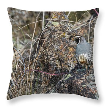 Throw Pillow featuring the photograph B53 by Joshua Able's Wildlife