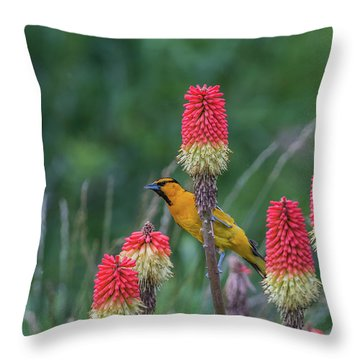 Throw Pillow featuring the photograph B56 by Joshua Able's Wildlife