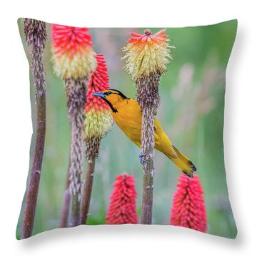 Throw Pillow featuring the photograph B59 by Joshua Able's Wildlife