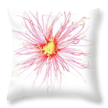 B760/1832 Throw Pillow