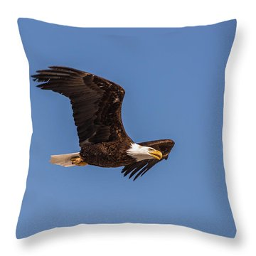 Throw Pillow featuring the photograph B8 by Joshua Able's Wildlife