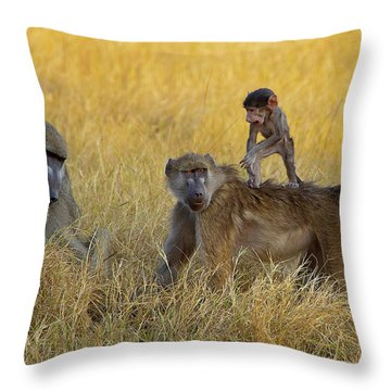 Baboons In Botswana Throw Pillow