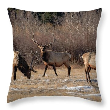 Bachelors Out On The Town Throw Pillow
