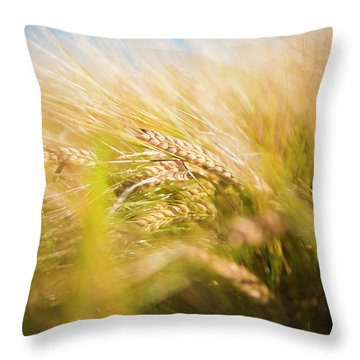 Background Of Ears Of Wheat In A Sunny Field. Throw Pillow