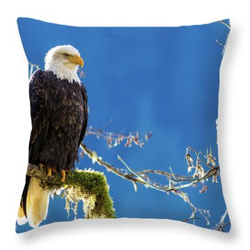 Backlit Bald Eagle In Squamish Throw Pillow