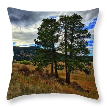 Throw Pillow featuring the photograph Backlit Pine by Dan Miller