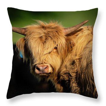 Throw Pillow featuring the photograph Bad Hair Day 4 X 5 by Jeff Phillippi