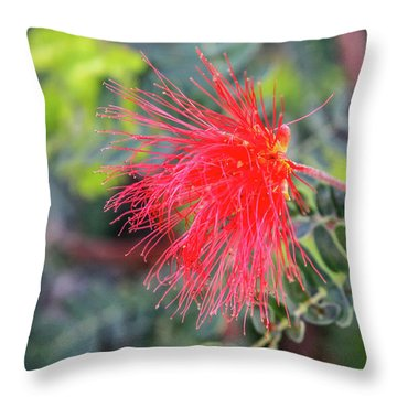 Baja Fairy Duster Throw Pillow