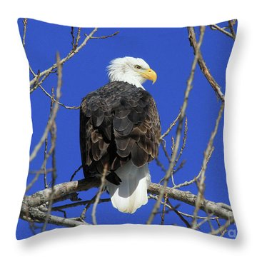 Bald Eagle And Blue Sky Throw Pillow