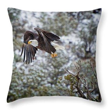 Bald Eagle Flight Throw Pillow