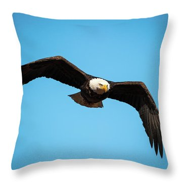 Throw Pillow featuring the photograph Bald Eagle In Flight  by Jeff Phillippi