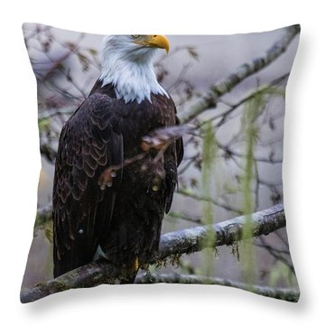 Bald Eagle In Rain Forest Throw Pillow