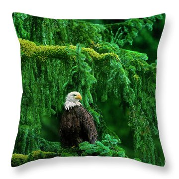 Bald Eagle In Temperate Rainforest Alaska Endangered Species Throw Pillow