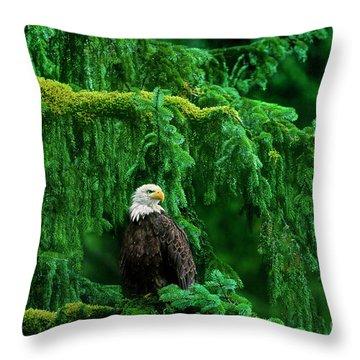 Bald Eagle In Temperate Rainforest Alaska Endangered Species Throw Pillow