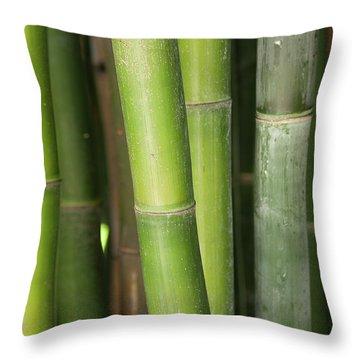 Bamboo Stalk 4057 Throw Pillow