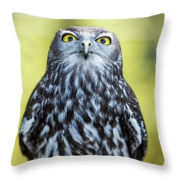 Throw Pillow featuring the photograph Barking Owl by Rob D Imagery