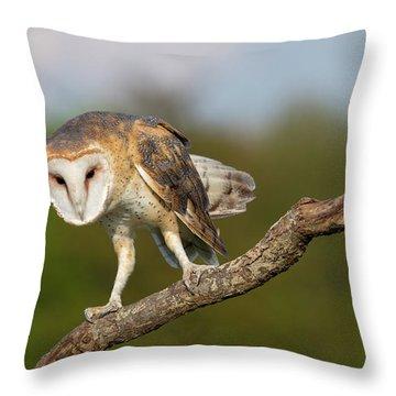 Barn Owl 5151801 Throw Pillow