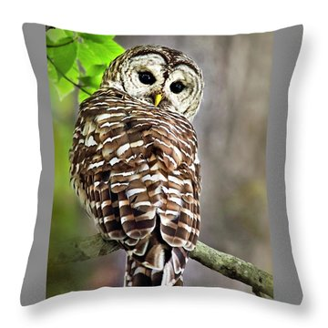 Throw Pillow featuring the photograph Barred Owl by Christina Rollo