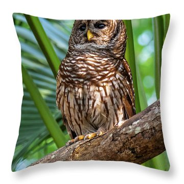 Barred Owl On Perch Throw Pillow