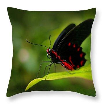 Ecosystem Throw Pillows