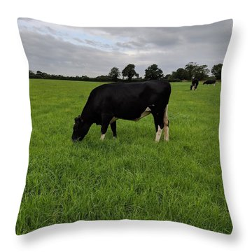 Beautiful Dairy Heifer Throw Pillow