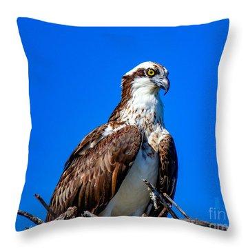 Beautiful Osprey Throw Pillow