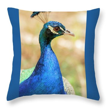 Throw Pillow featuring the photograph Beautiful Peacock by Rob D Imagery