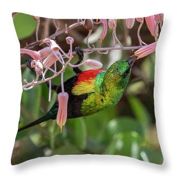 Beautiful Sunbird Throw Pillow