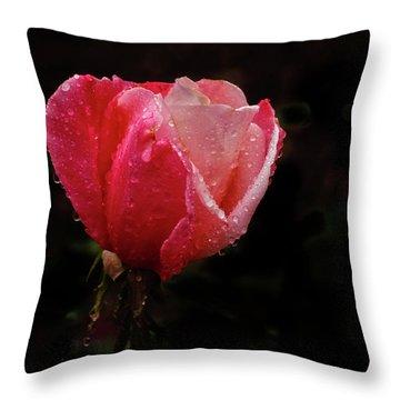 Beautiful Wet Rose Throw Pillow