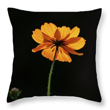 Throw Pillow featuring the photograph Behind Light And Shadow by Dale Kincaid