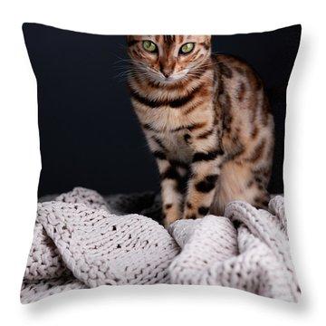 Bengal Cat Portrait Throw Pillow