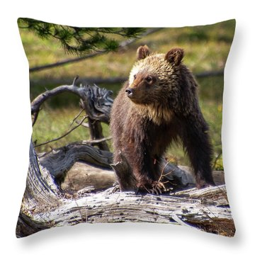 Better View From Here Throw Pillow