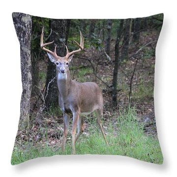 Big Buck Throw Pillow