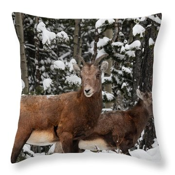 Bighorn Sheep In Deep Snow Throw Pillow