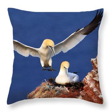 Atlantic Canada Throw Pillows