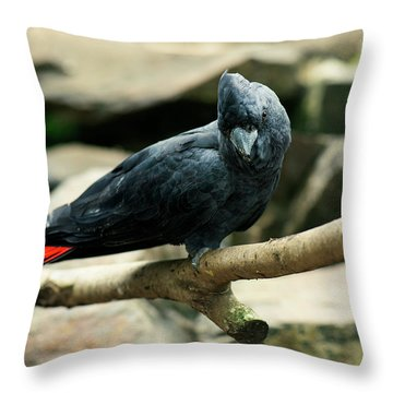 Black And Red Cockatoo. Throw Pillow