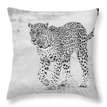 Black And White Leopard Walking On A Road Throw Pillow