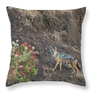 Throw Pillow featuring the photograph Black Backed Jackal by Alex Lapidus