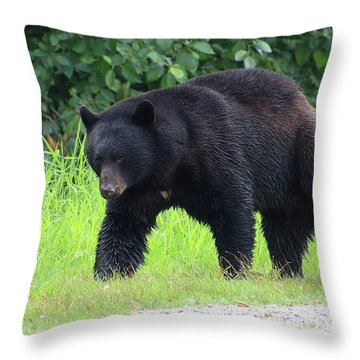 Black Bear Crossing Throw Pillow